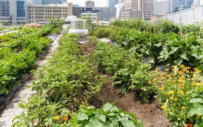 Horta Urbana: o primeiro passo para uma vida sustentável